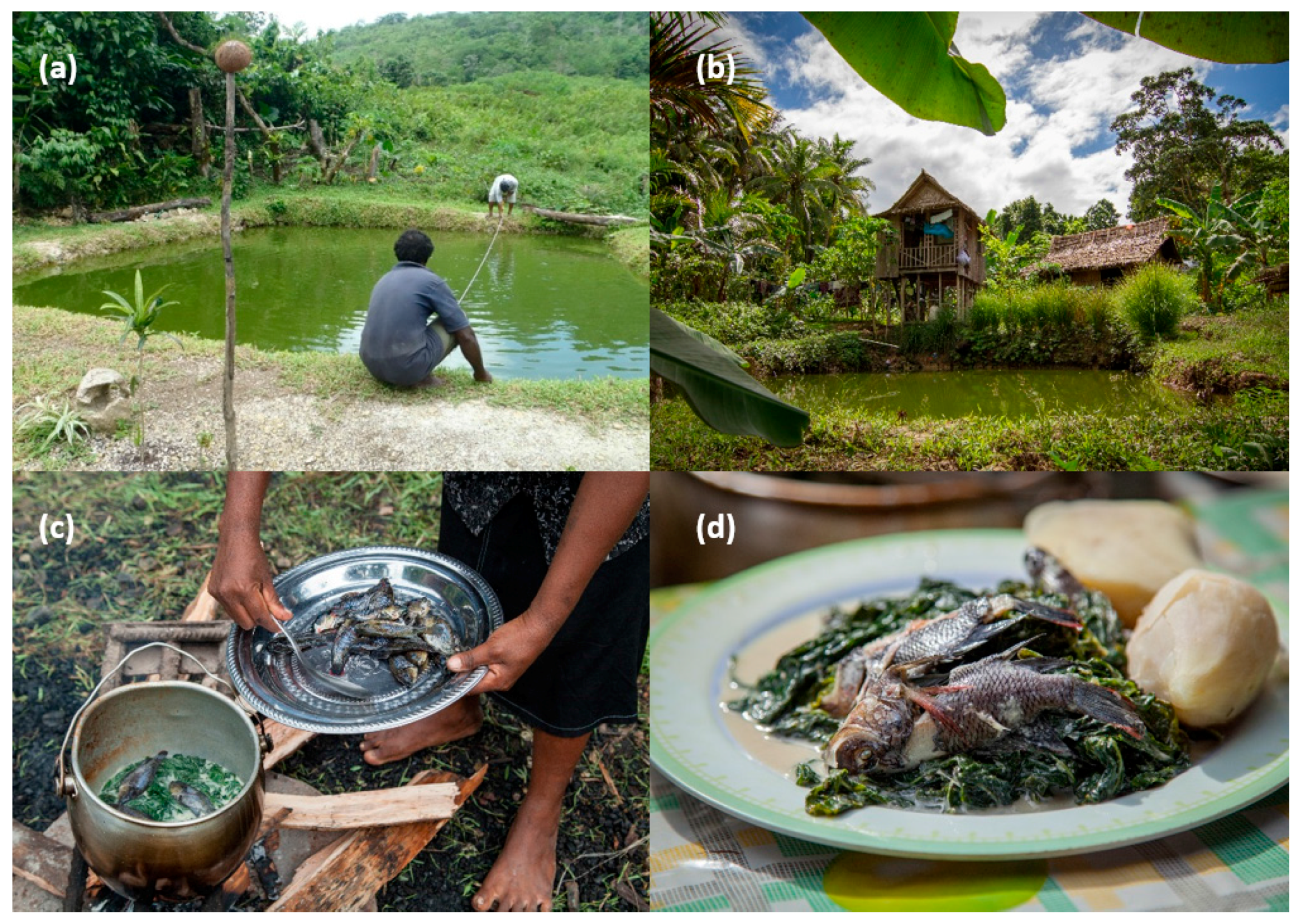 overview of sustainable aquaculture essay