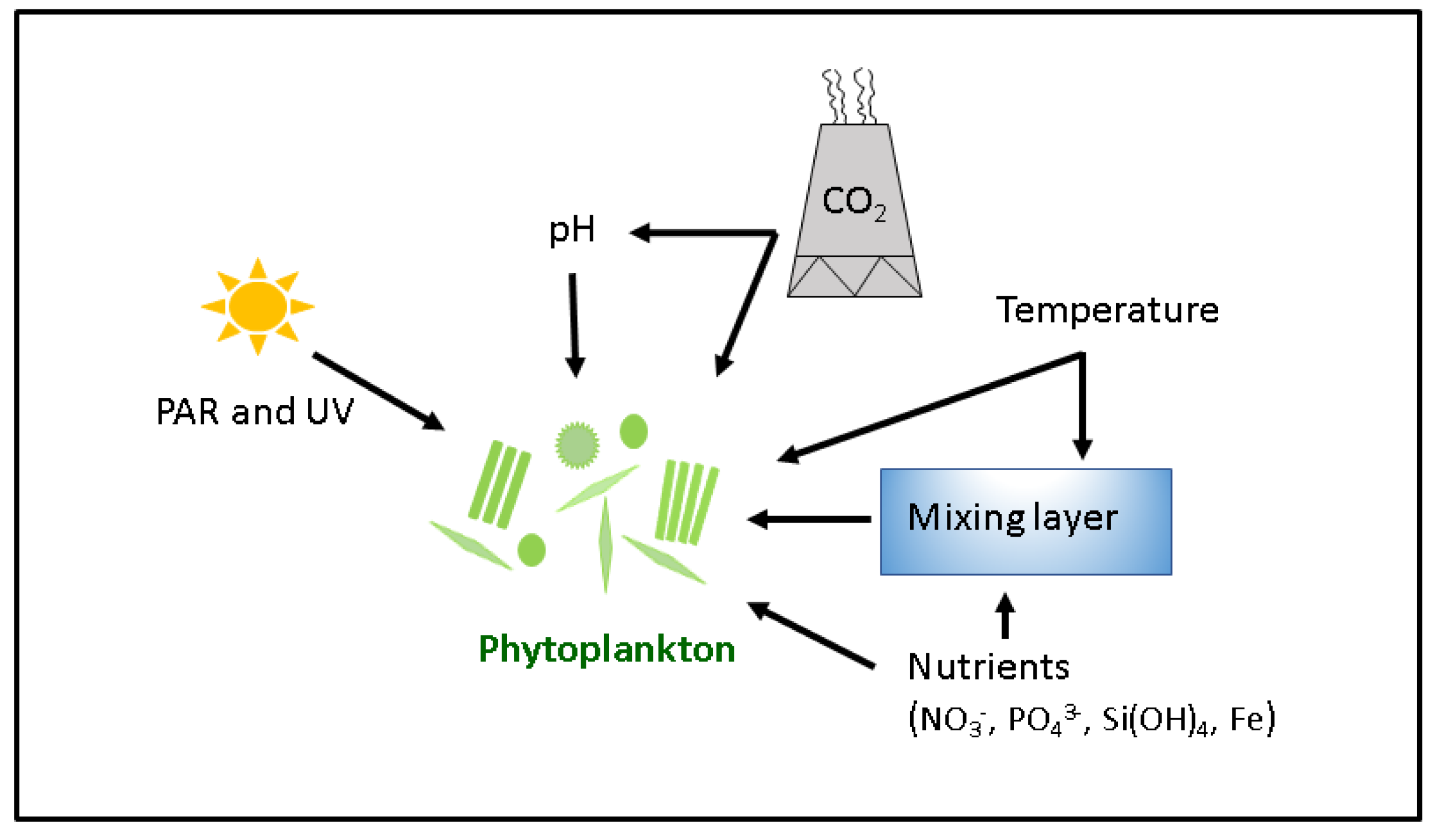 Sustainability Free Full Text Phytoplankton As Key Mediators Of Animal Cells Moreover Carbon Cycle On Plant And Cell Diagram 10 00869 G003