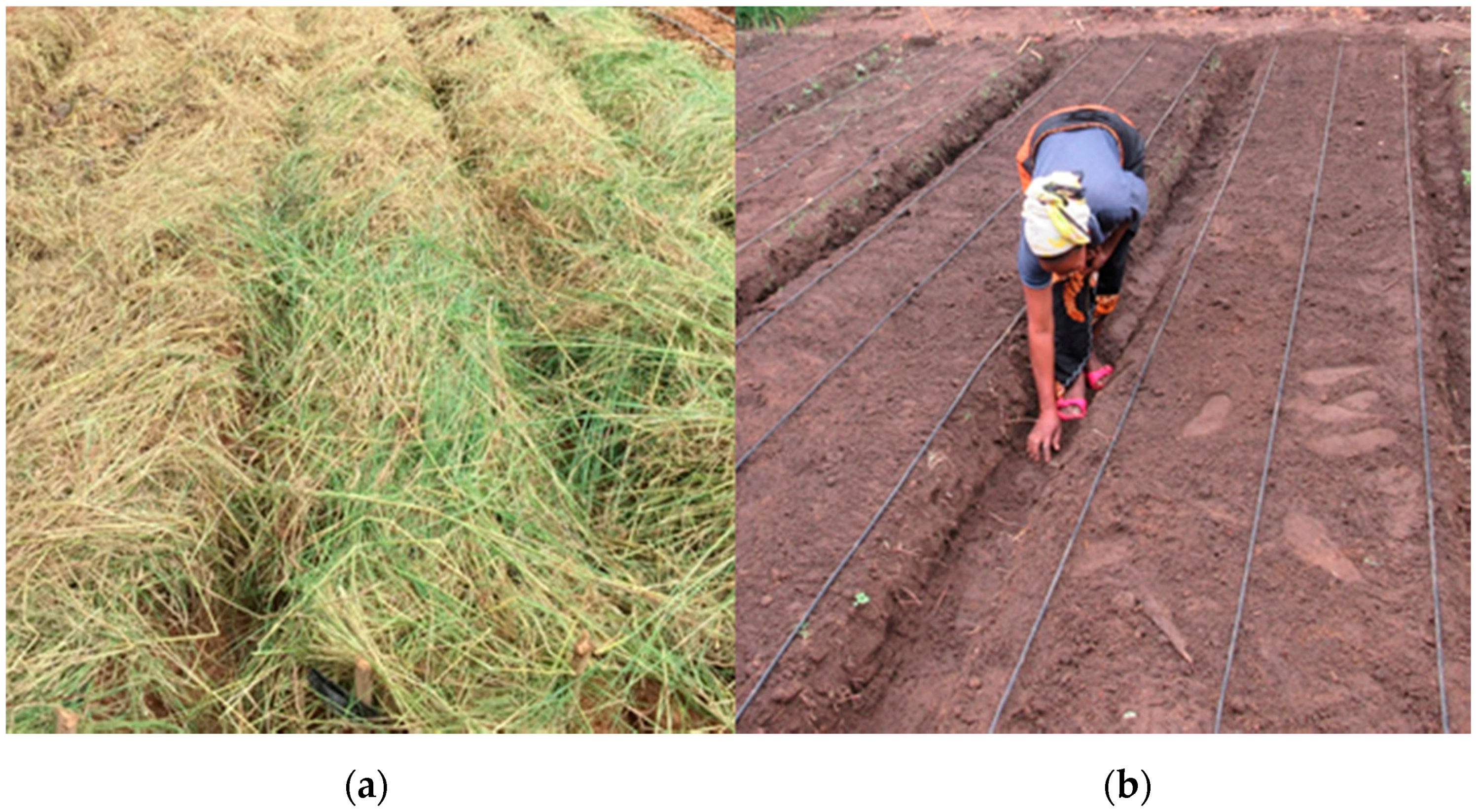 Sustainability | Free Full-Text | Modeling the Impacts of