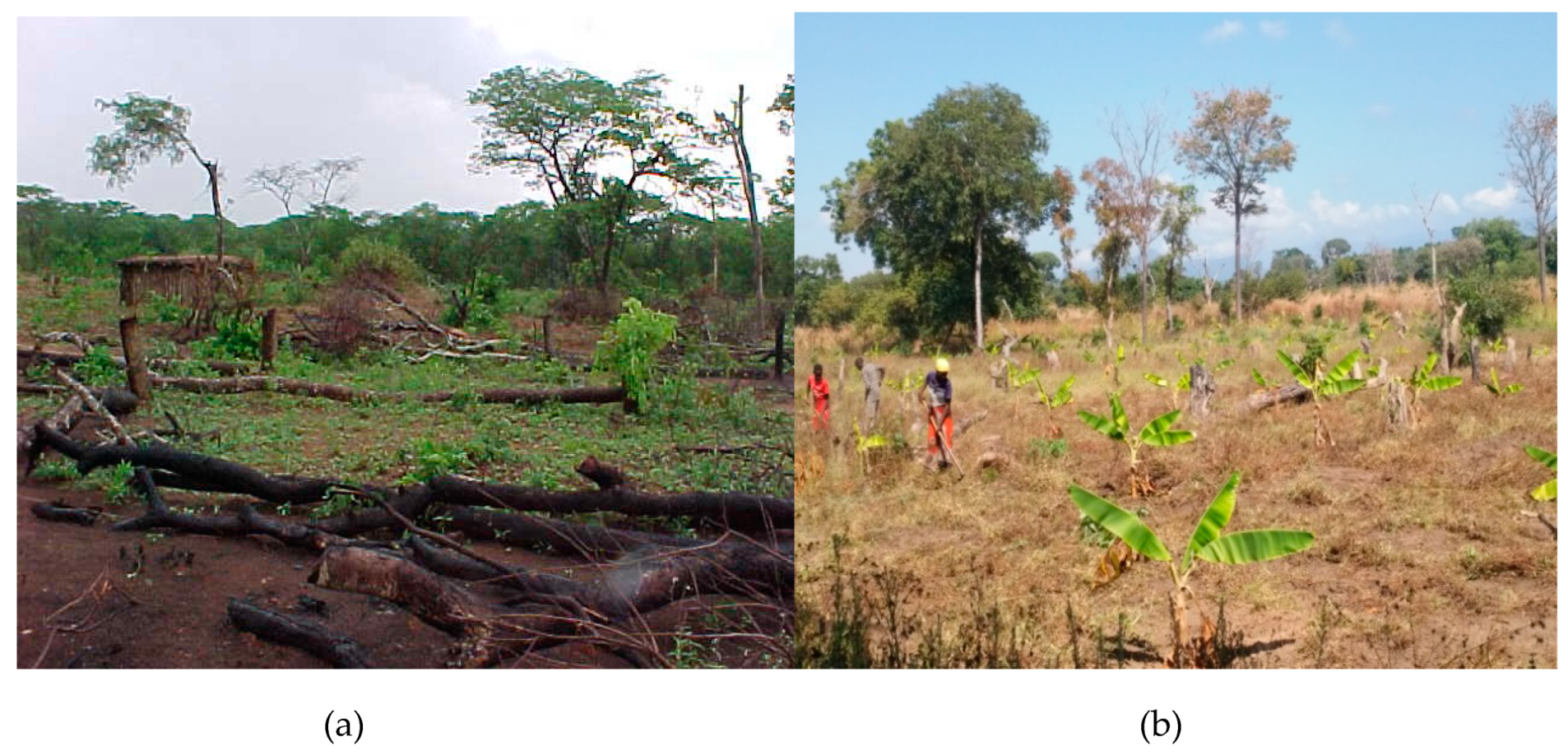 Sustainability | Free Full-Text | Land Use Change Trends and