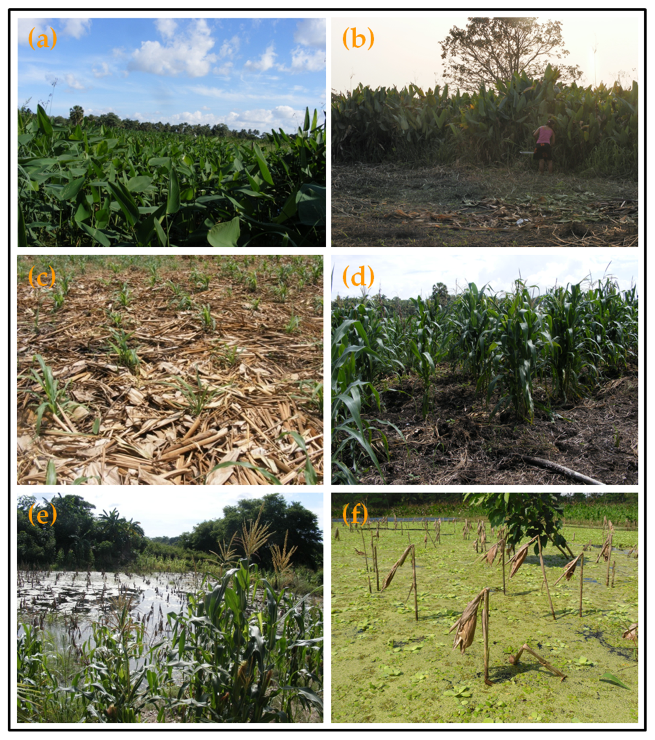 Sustainability | Free Full-Text | The Marceño Agroecosystem