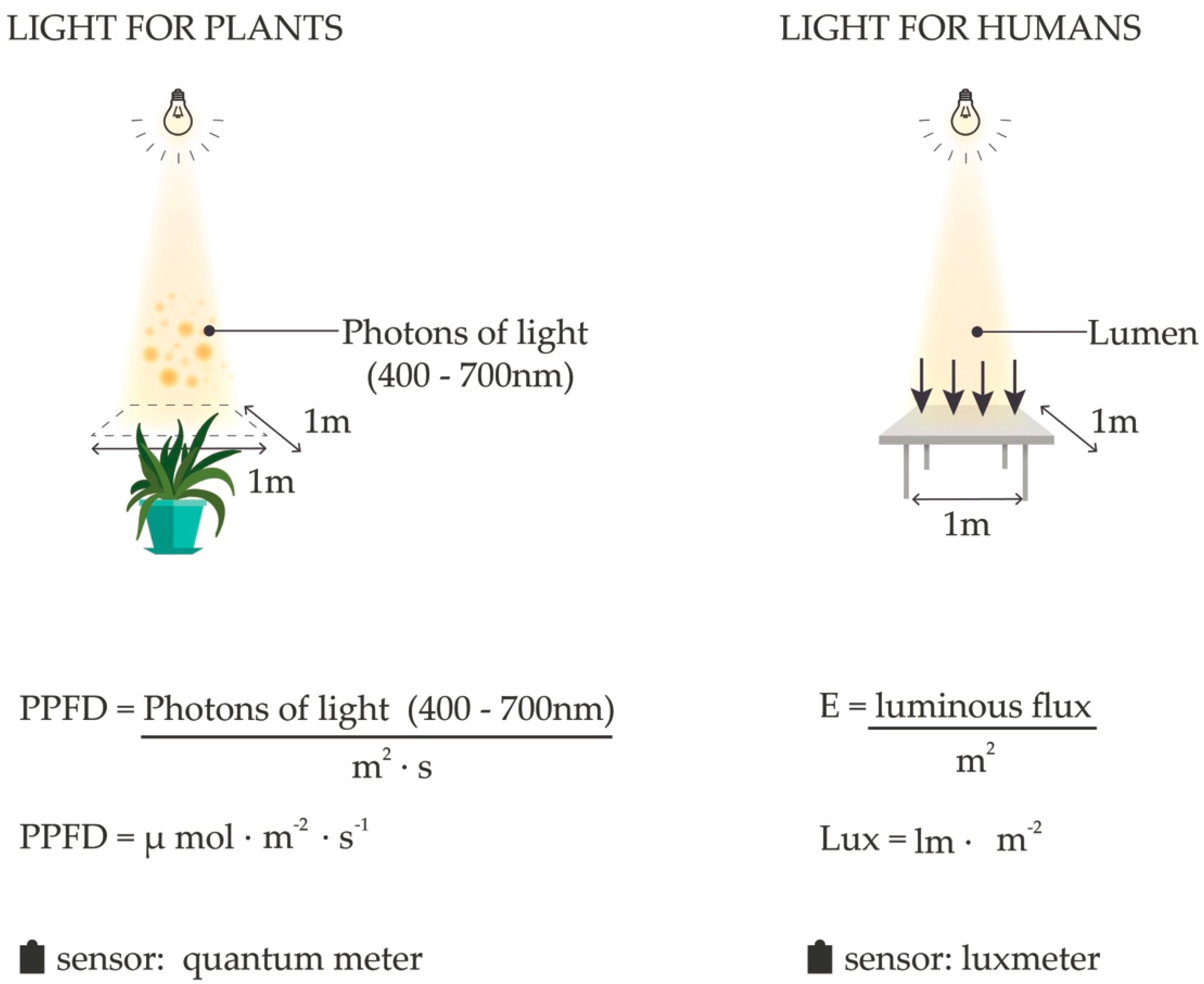 LUX PRO Key Chain 60 Lumen Focus Light 130-Assorted Colors
