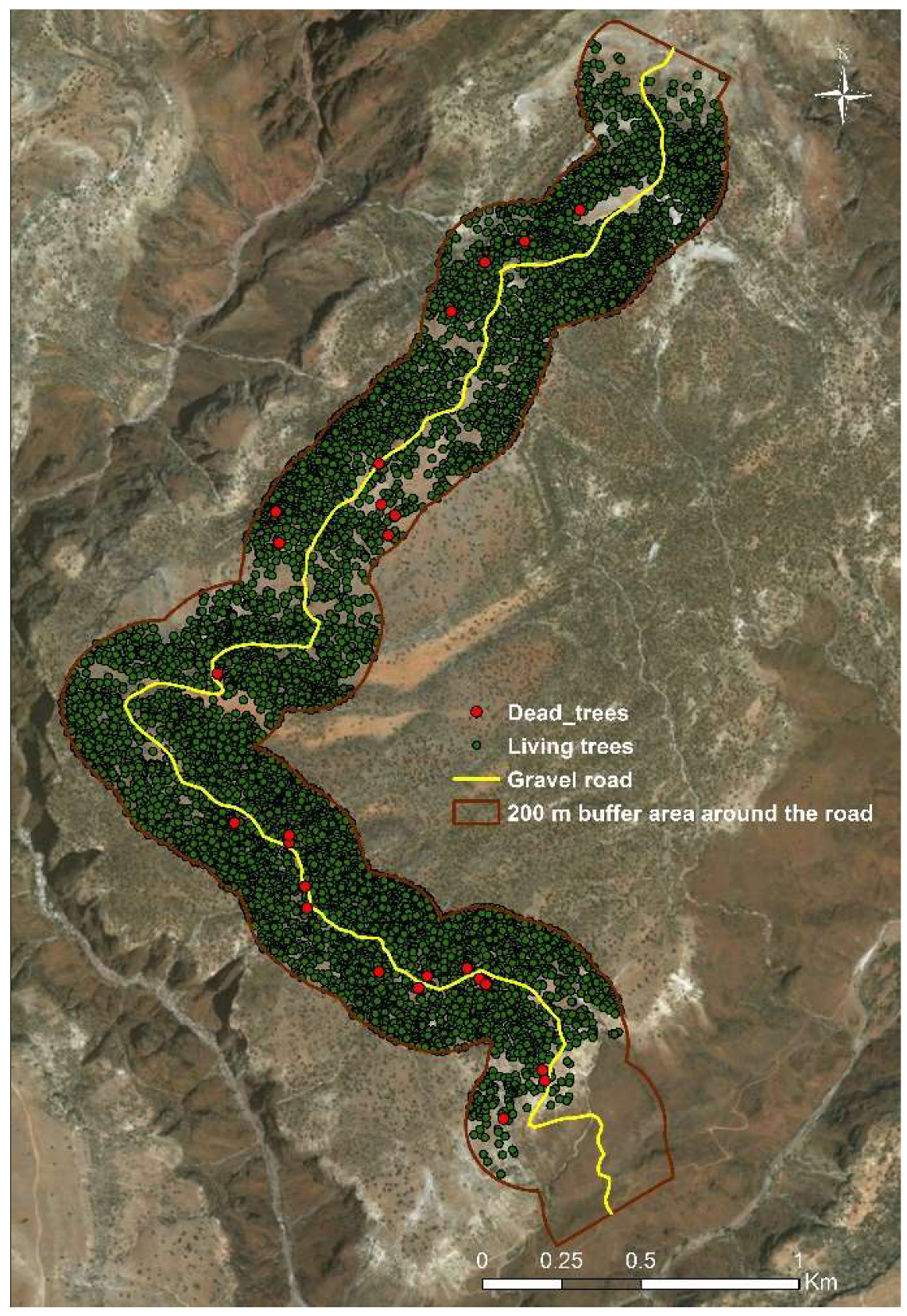 Sustainability Free Full Text Sustainable Land Use Management Needed To Conserve The Dragon S Blood Tree Of Socotra Island A Vulnerable Endemic Umbrella Species Html