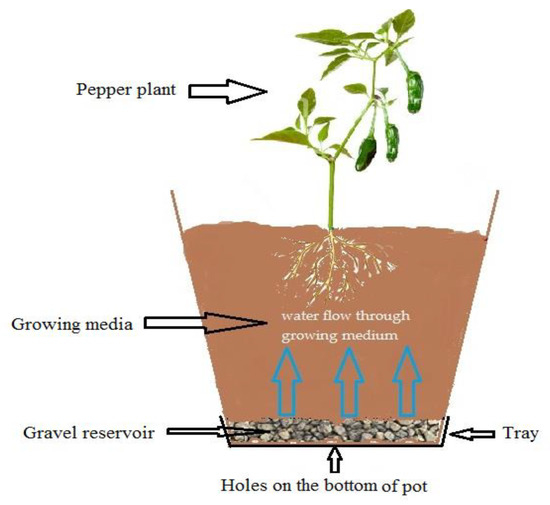 What Is Passive Sub-Irrigation Technique