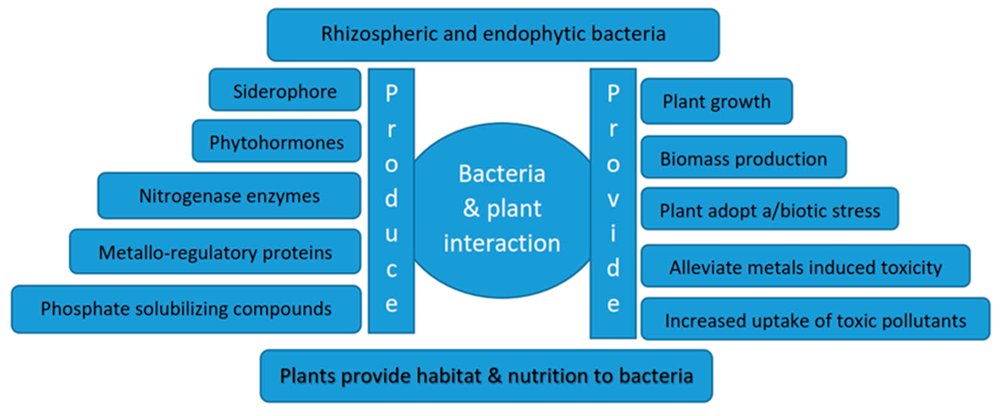 Sustainability Free Full Text Role Of Microorganisms In The Remediation Of Wastewater In Floating Treatment Wetlands A Review Html