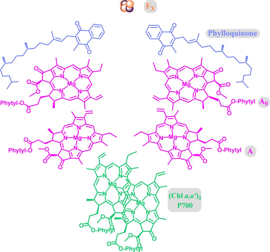Symmetry   Free Full-Text   Chlorophylls, Symmetry ...