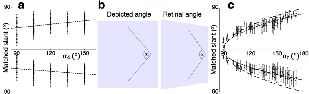 Oblique Angle Definition of The Oblique Angle Cue