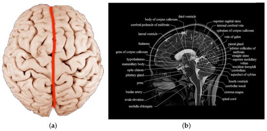The theory of the two hemispheres of the human brain