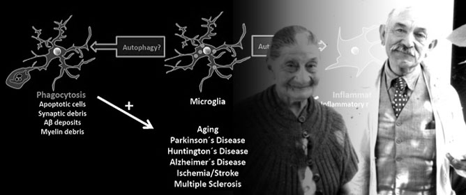 Autophagy and Microglia: Novel Partners in Neurodegeneration and Aging