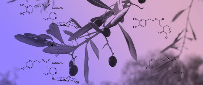 Potential Protective Role Exerted by Secoiridoids from <em>Olea europaea</em> L