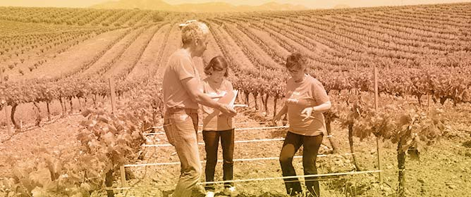 Applying the RUSLE and ISUM in the Tierra de Barros Vineyards (Extremadura, Spain) to Estimate Soil Mobilisation Rate