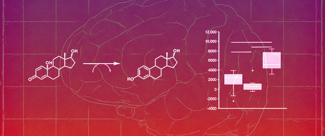 Brain-Selective Estrogen Therapy Prevents Androgen Deprivation-Associated Hot Flushes in a Rat Model