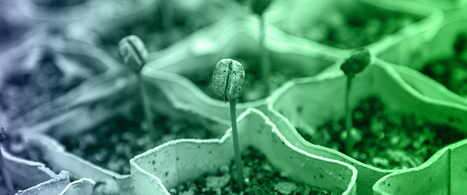 An Updated Overview on the Regulation of Seed Germination