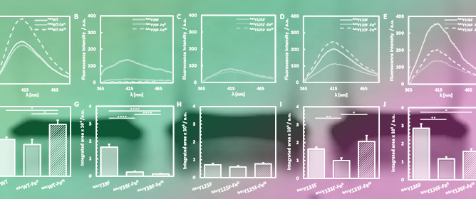 Mapping of Photochemically-Derived Dityrosine across Fe-Bound N-Acetylated α-Synuclein