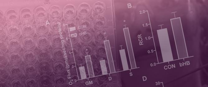 Ketones Elicit Distinct Alterations in Adipose Mitochondrial Bioenergetics