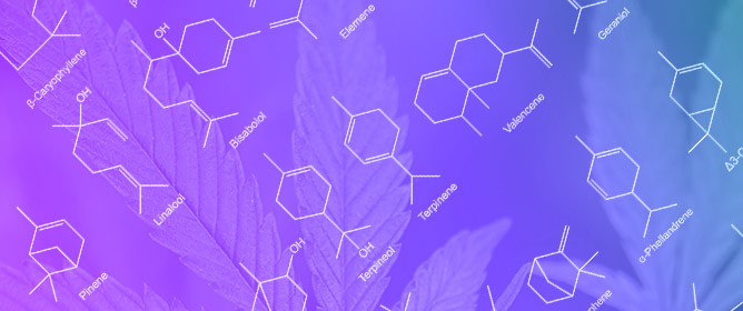 Anti-Cancer Potential of Cannabinoids, Terpenes, and Flavonoids Present in Cannabis