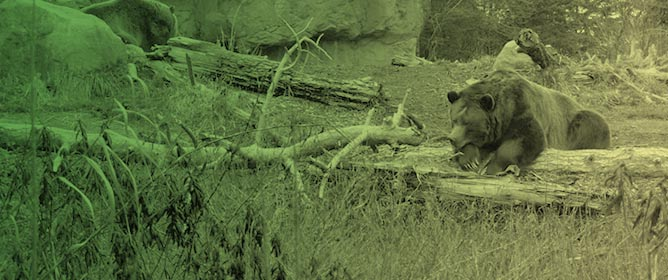Seasonal and Daily Activity of Two Zoo-Housed Grizzly Bears (<em>Ursus arctos horribilis</em>)