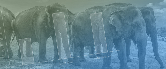 Longitudinal Improvements in Zoo-Housed Elephant Welfare: A Case Study at ZSL Whipsnade Zoo