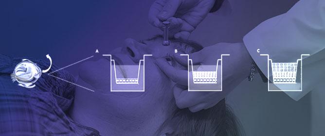 Development of In Vitro Corneal Models: Opportunity for Pharmacological Testing