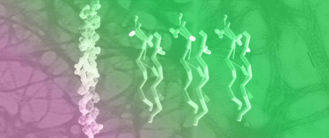 Collagen Mimetic Peptides