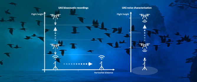 Ears in the Sky: Potential of Drones for the Bioacoustic Monitoring of Birds and Bats