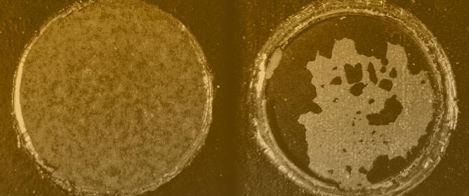 Rust Conversion Performance of Phosphoric Acid-Gallic Acid in Vinyl Chloride Acrylic Emulsion