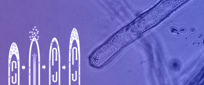 Chemical Interactions at the Interface of Plant Root Hair Cells and Intracellular Bacteria