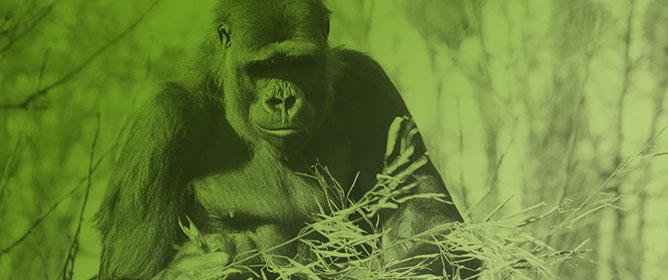 Use of Interactive Technology in Captive Great Ape Management