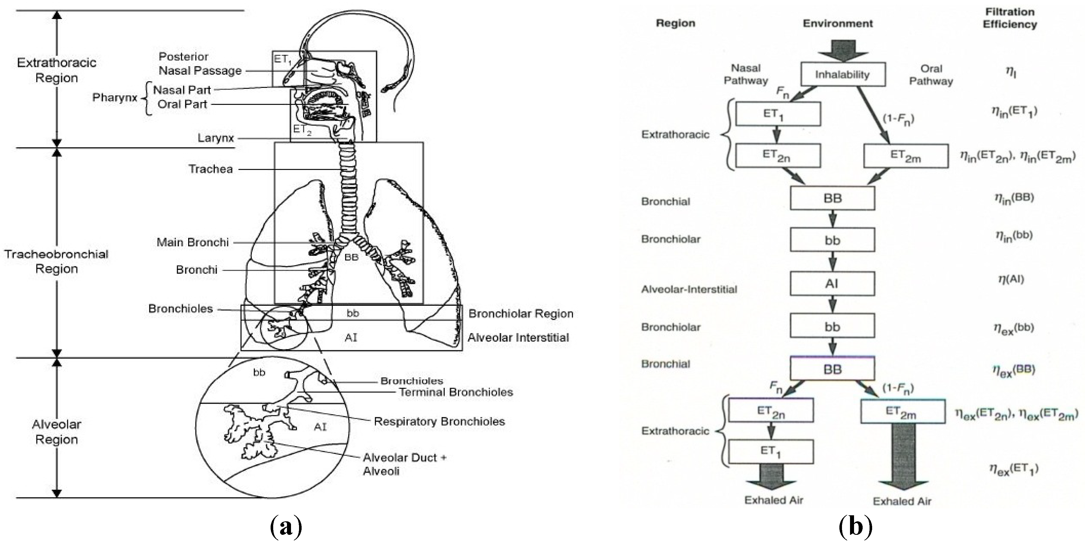 Analysis of the behavior of the respiratory system with constant inspiratory flow.