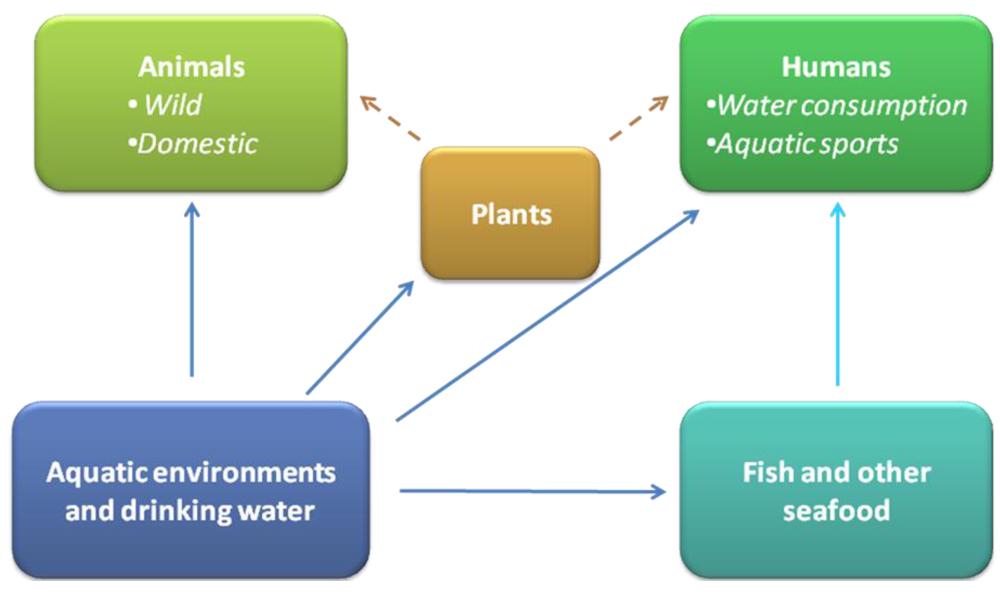 essay on aquatic animals