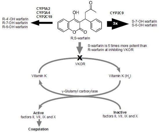 Warfarin anticoagulation