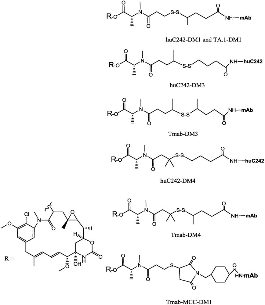 Immunotoxins And Anticancer Drug