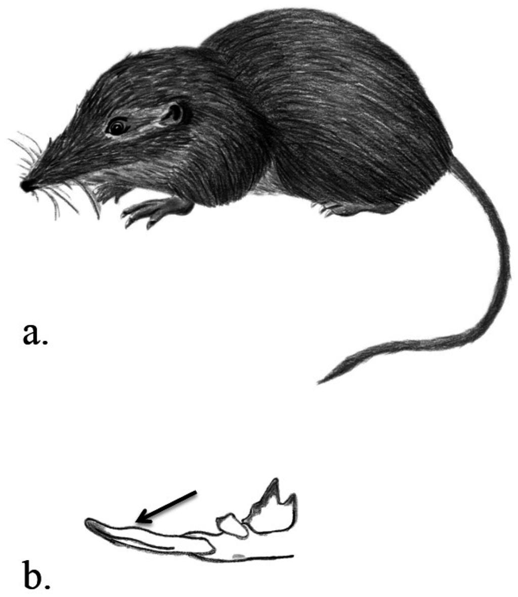 Fighting shrews. Methods
