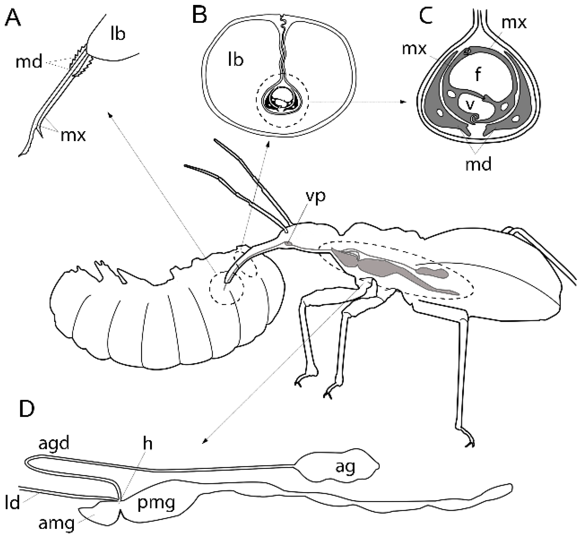 Toxins | Free Full-Text | Venoms of Heteropteran Insects: A Treasure ...