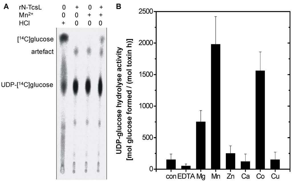 Clostridium difficile toxin essay