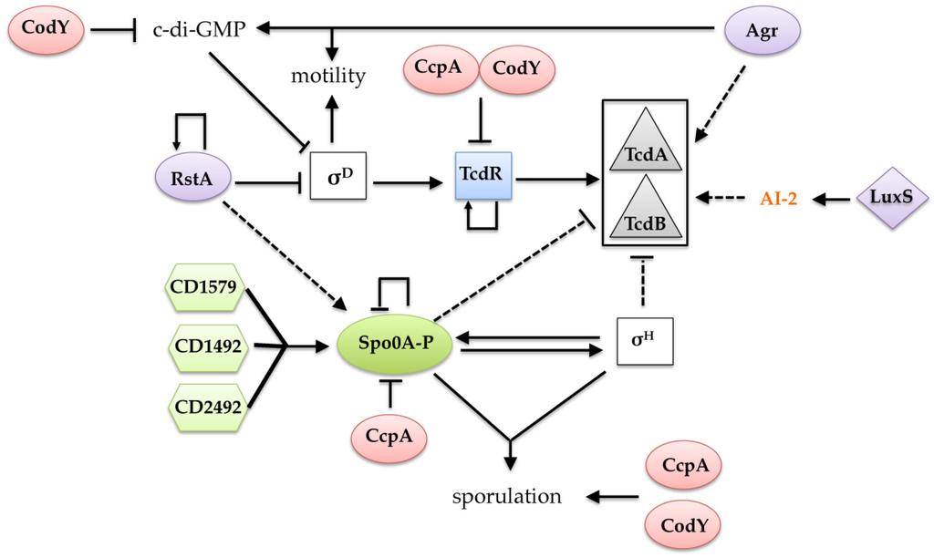 Clostridium Difficile (C.diff)