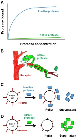 Toxins | Special Issue : Snake Venom Metalloproteinases