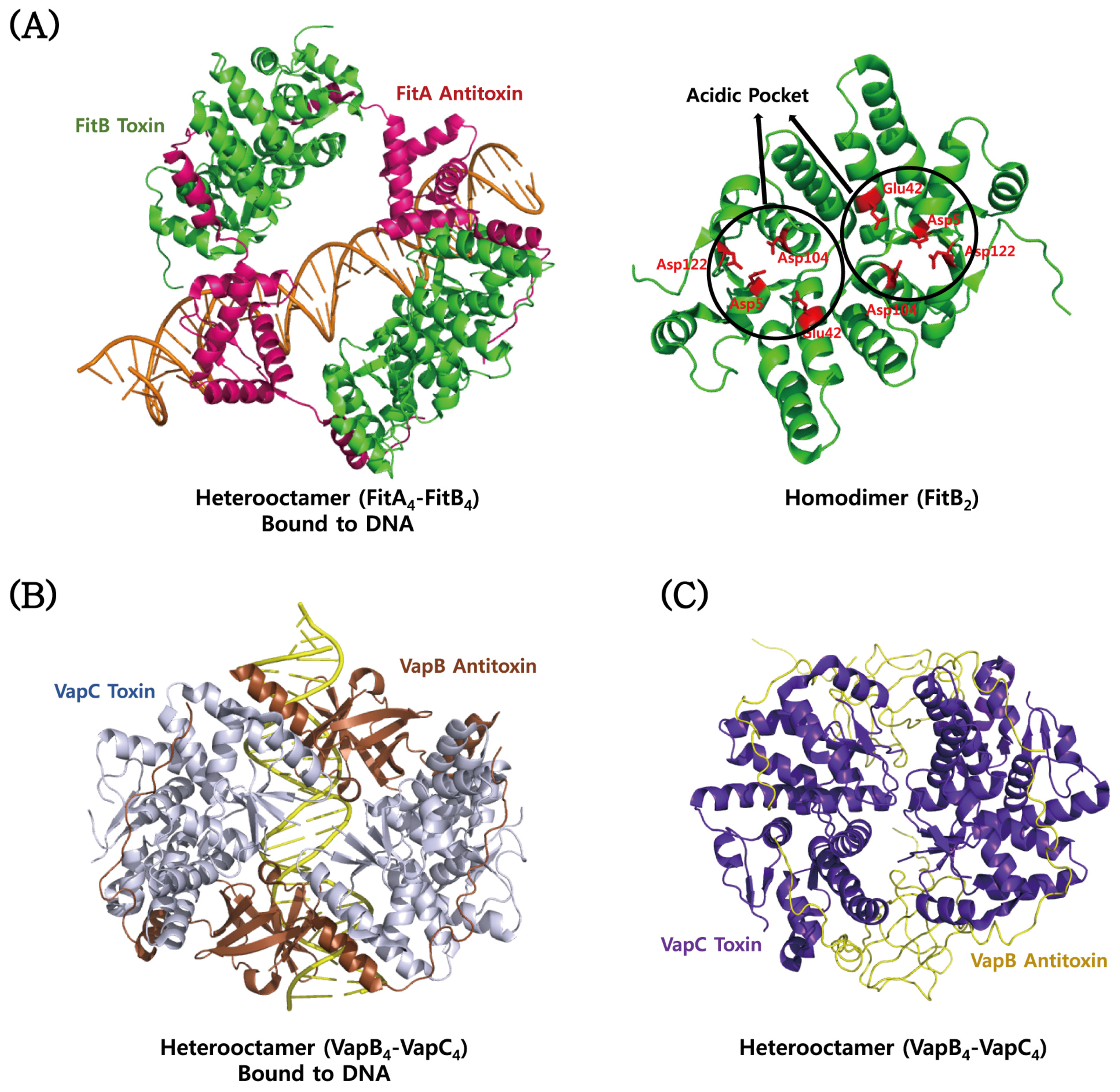 Toxins Free Full Text Structure Biology And Therapeutic Figure Depicts The Typical Structures Of A Eukaryotic Plant Cell 08 00305 G005 5 Structural