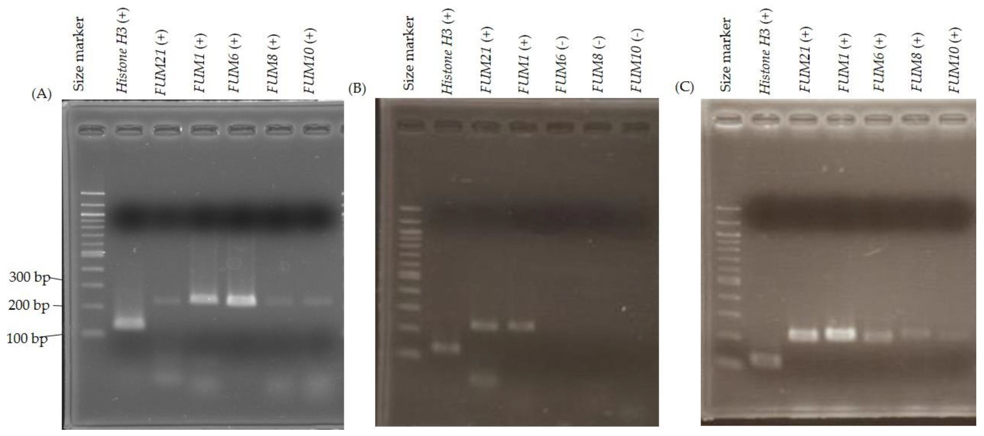 Toxins | Free Full-Text | A Natural Variation of Fumonisin Gene