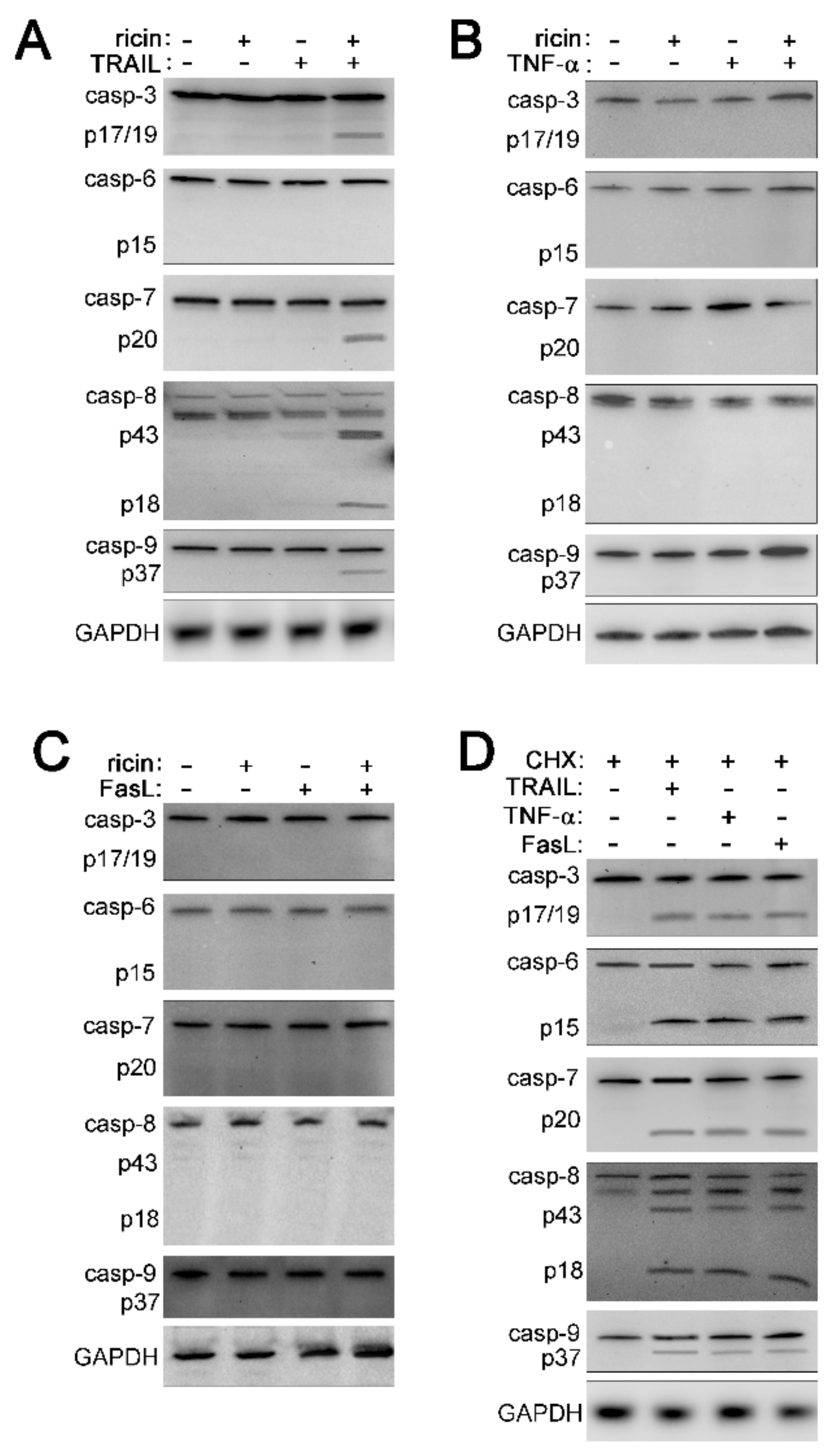 Toxins   Free Full-Text   TNF Family Cytokines Induce Distinct Cell