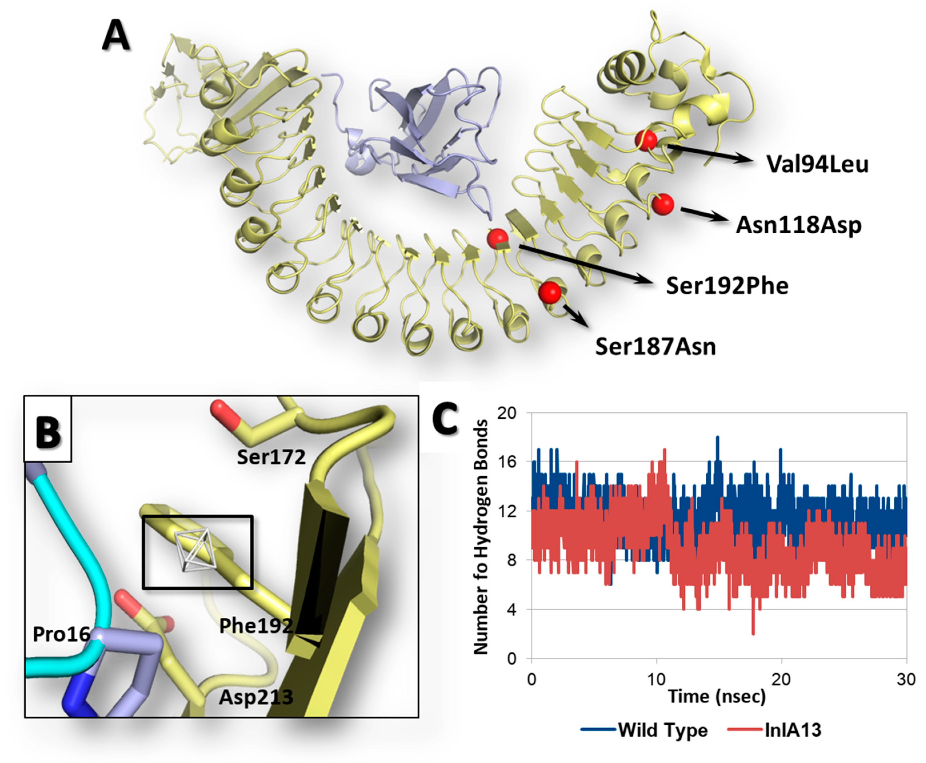 Toxins Free Full Text A Structural Study On The Listeria Monocytogenes Internalin Human E Cadherin Interaction Molecular Tool To Investigate Effects Of Missense Mutations