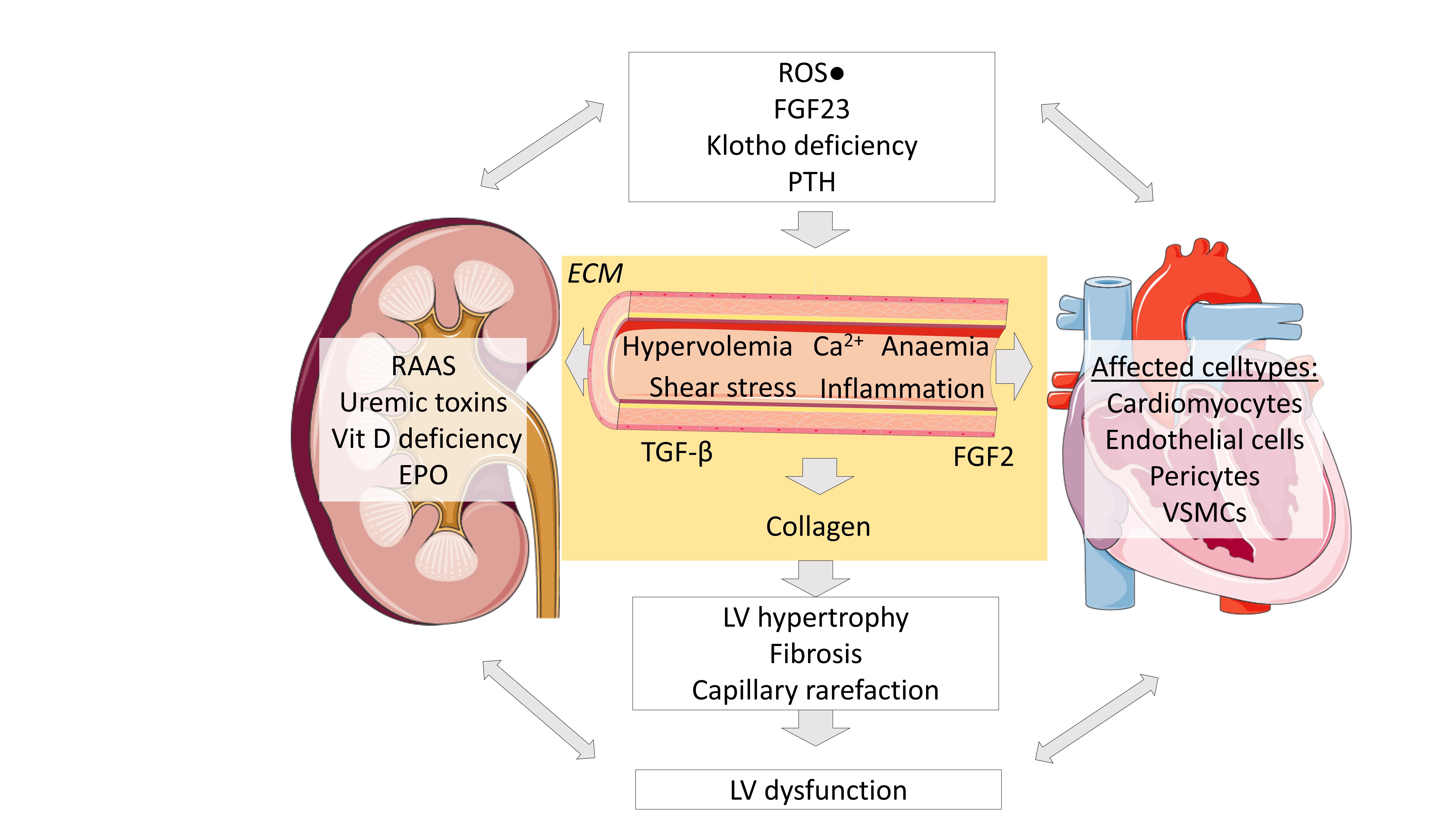 Toxins Free Full Text Cardiac Remodeling In Chronic Kidney Disease Html