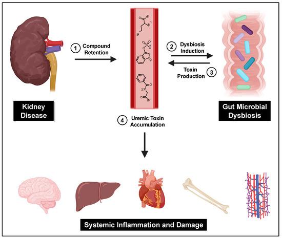 uremic toxins: classification