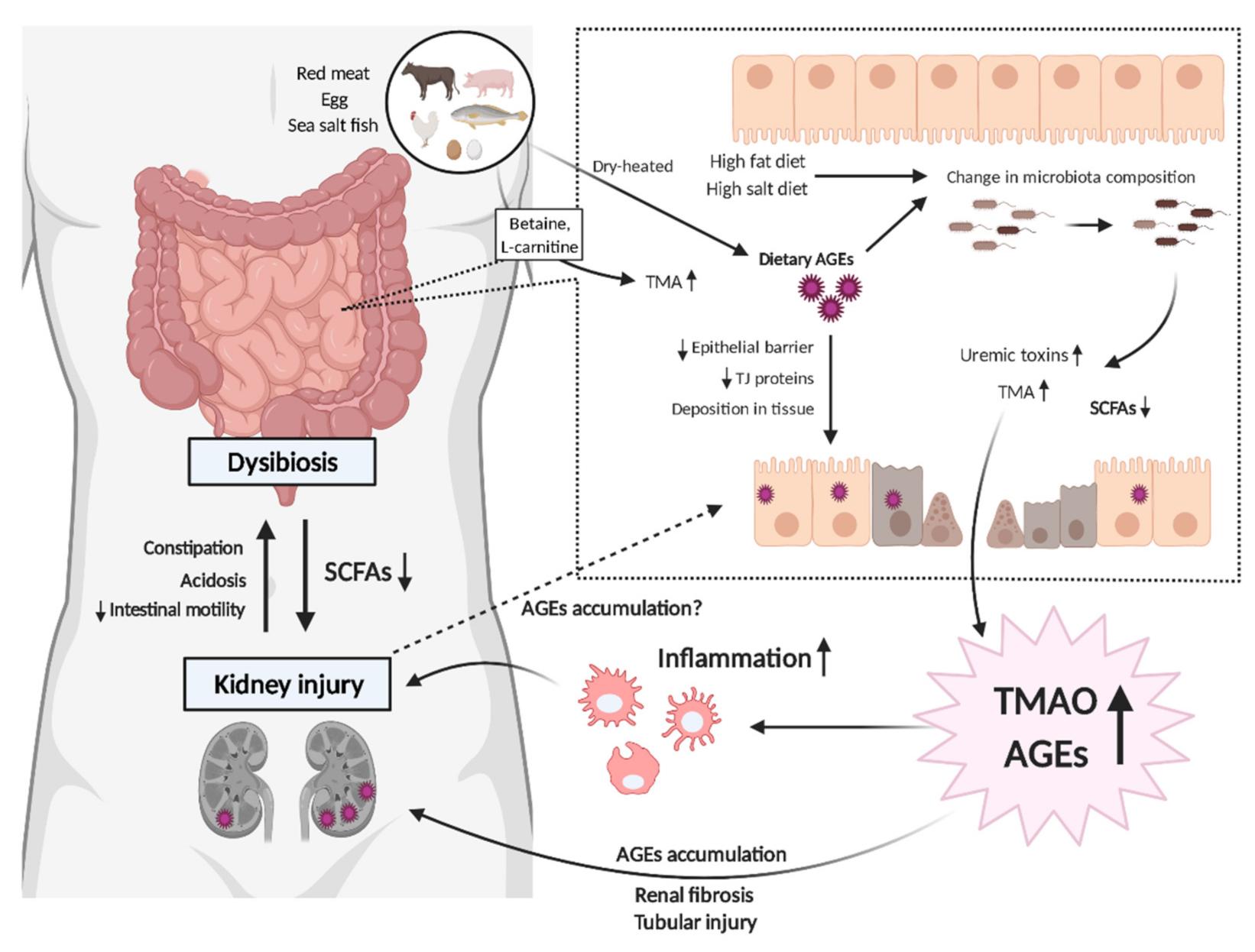 toxic buildup in gut