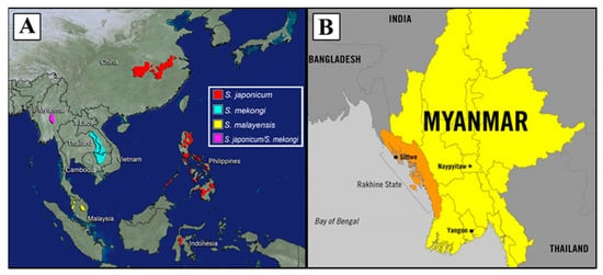 TropicalMed | Special Issue : Prospects for Schistosomiasis