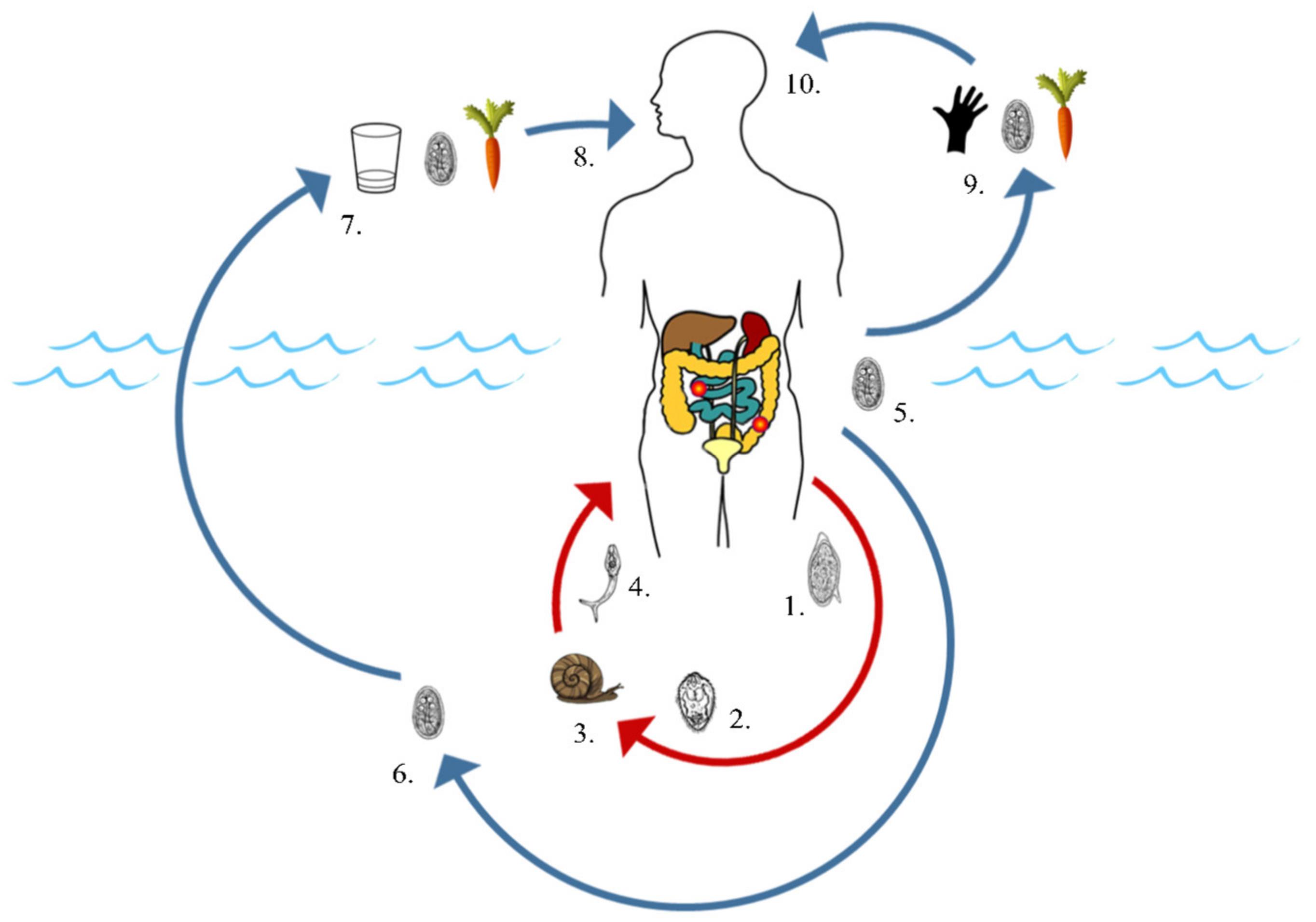 parazitáktól való megtisztításra szolgáló csodaszerek