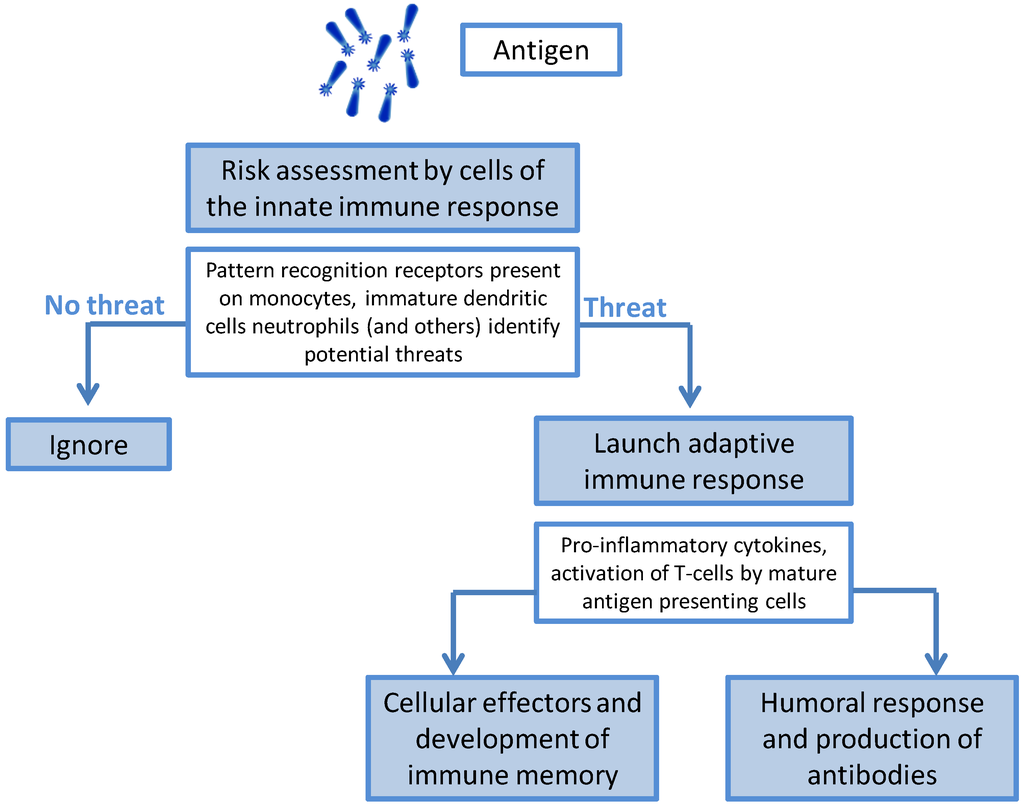 innate immune system essay The adaptive immunity, on the contrary, refers to all the antigen specific responses of the immune system it entails a complex immune response reaction compared to the innate immunity the adaptive immunity requires that the antigen be processed and recognized (the open university, 2006, p 139.