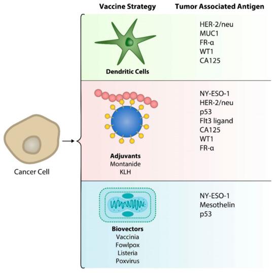 Hpv vaccine ovarian cancer