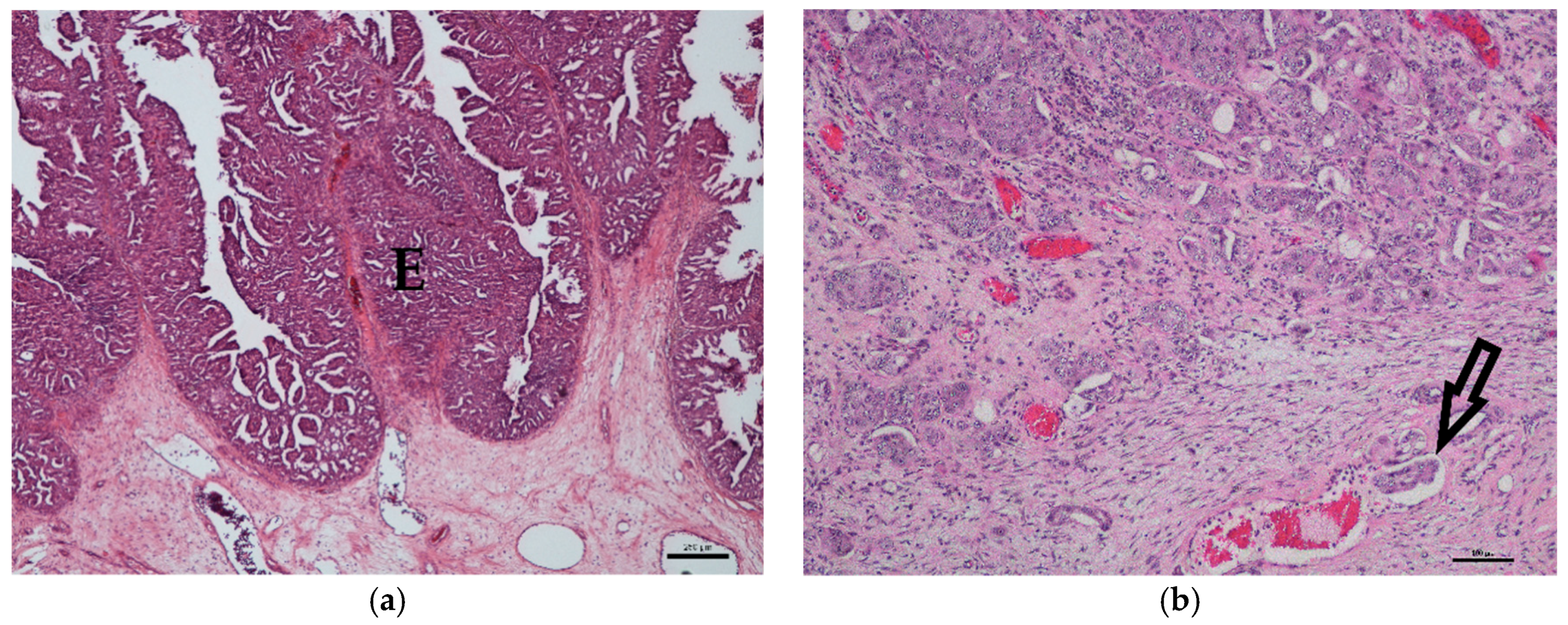 Veterinary Sciences Free Full Text Correlation Of Braf Variant V595e Breed Histological Grade And Cyclooxygenase 2 Expression In Canine Transitional Cell Carcinomas