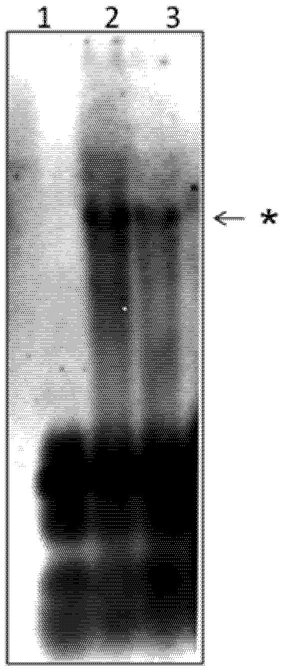 virus document 2012